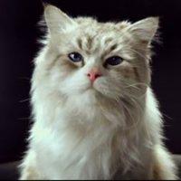 Les Neuf vies de Mr. Fuzzypants - bande annonce 2 - VF - (2016)