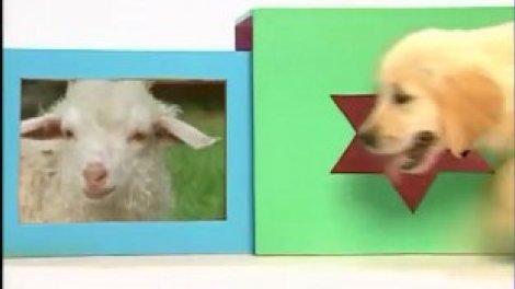 A La Découverte Des Bébés Animaux Sur Orange Vidéos