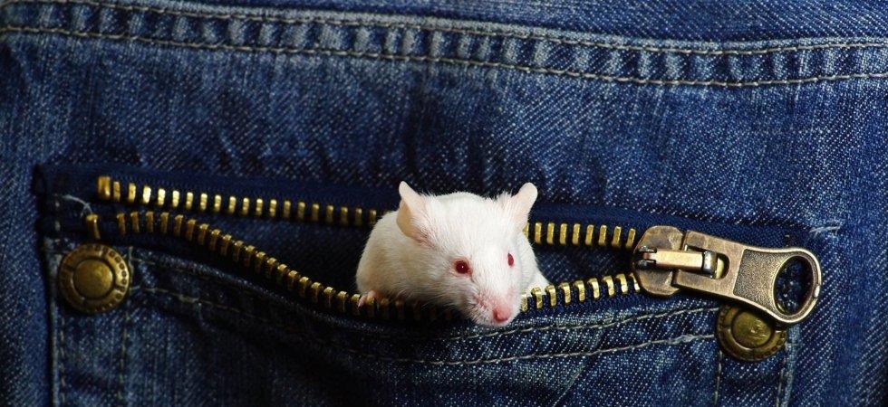 Une femme trouve une souris cousue dans sa robe Zara !