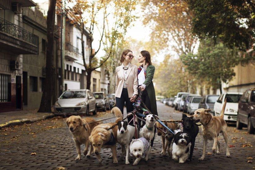 DogBuddy : pour trouver un dog-sitter