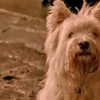 The Adventures Of Greyfriars Bobby - Bande annonce 1 - VO - (2005)