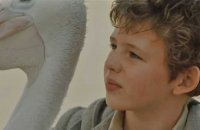 Storm Boy - Bande annonce 1 - VF - (2019)