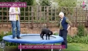 "Buzz : Le ""Jump Around"" des animaux"