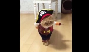 Chat pirate déguisé pour Halloween... Adorable