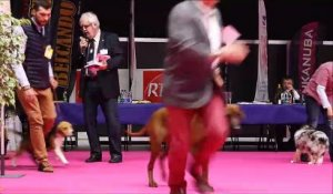 Exposition internationale canine de Colmar