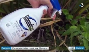 Monsanto : une condamnation record à cause du Round Up