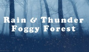RAIN & Thunder in a Foggy Forest | 10 HOURS - 4K, Thunderstorm and Rain for Sleep