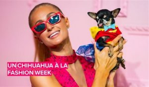 Le Chihuahua de Paris Hilton fait sensation à la Fashion Week de NY