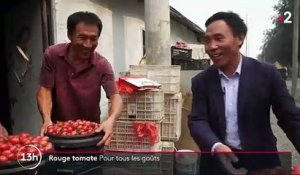 Feuilleton : rouge tomate (5/5)