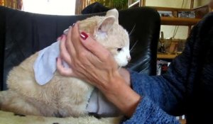 Giving my 18 year old cat Garfield elderly care, so he doesnt become a Smelly Cat