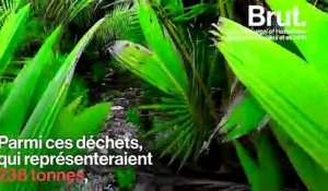 Plus d'un demi-million de bernard-l'hermites tués par le plastique