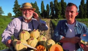 Terroir : le melon de Cavaillon