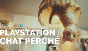 PlayStation : Chat Perché - Culture Craft