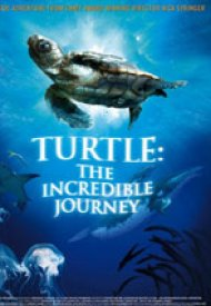 Affiche de Turtle: The Incredible Journey