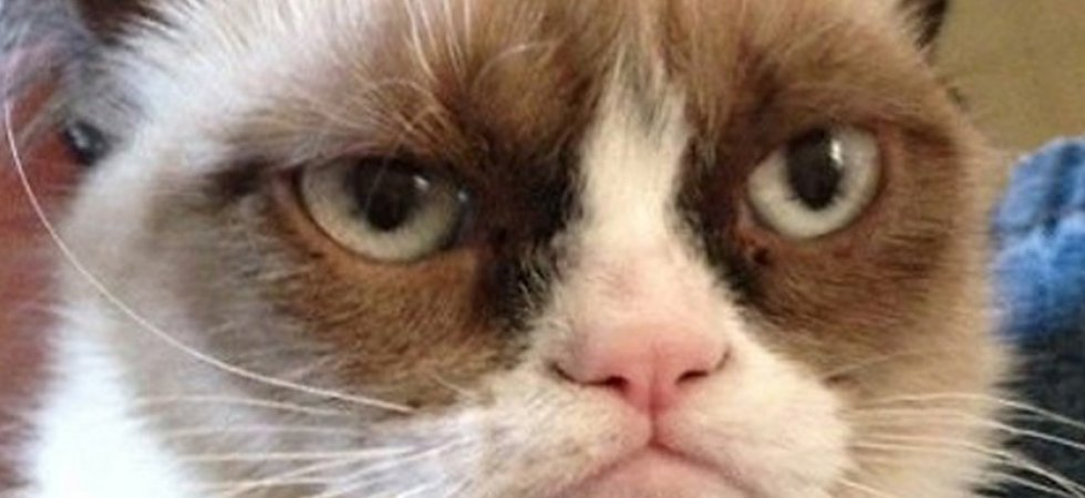 Grumpy Cat, future star du grand écran