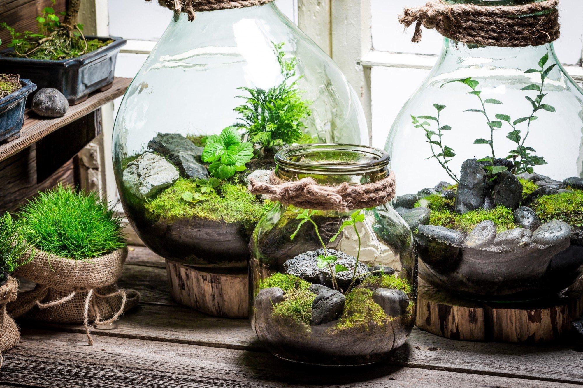Comment Faire Un Terrarium Plante Grasse comment créer son propre terrarium ?