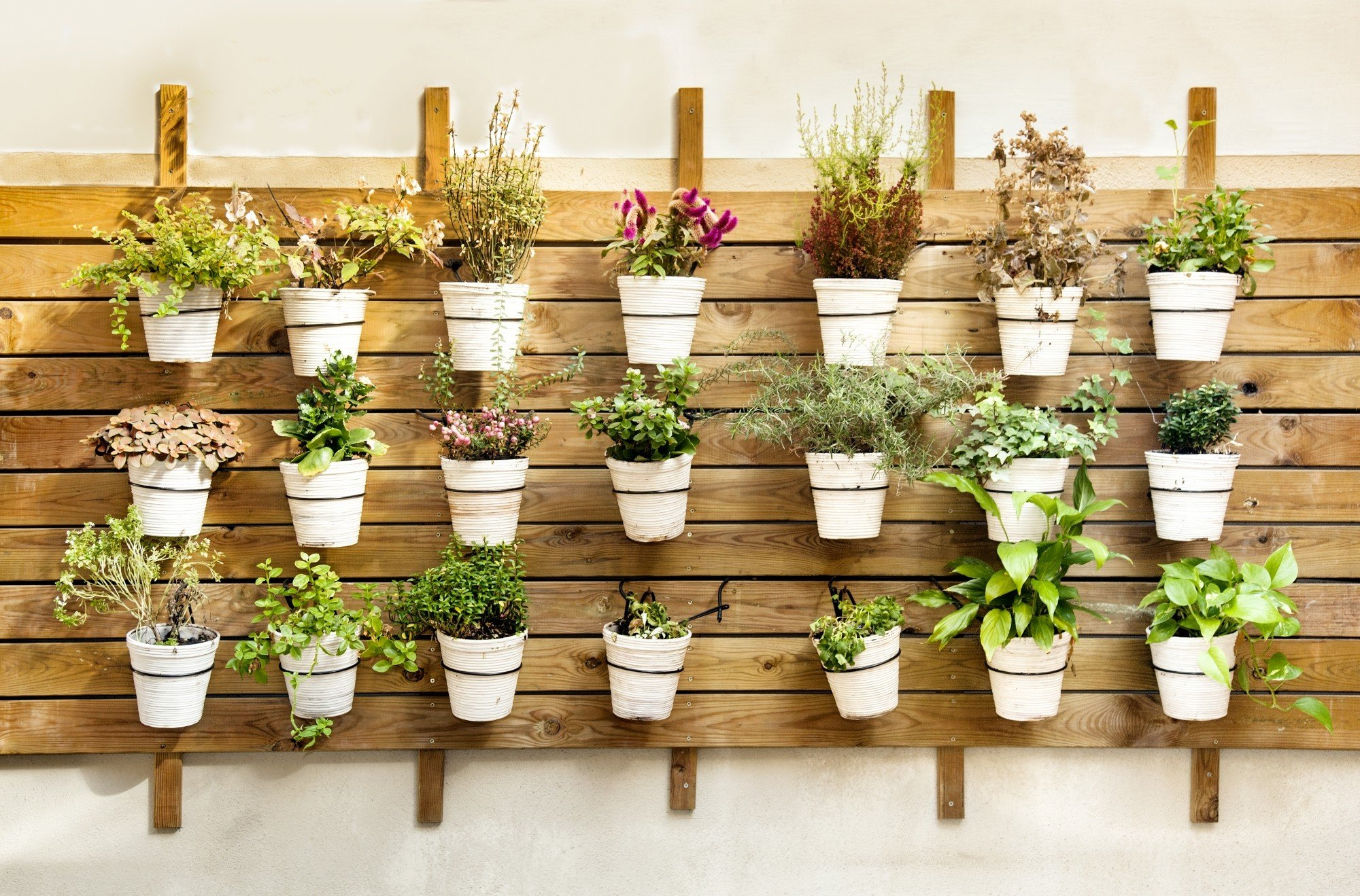 Plantes Aromatiques Sur Terrasse comment conserver ses plantes aromatiques ?